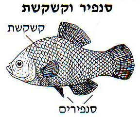 What is kashrut moshe 39 s speech for List of fish with fins and scales